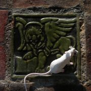 'THE MOUSE MADE OF DOUGH' audio CDs